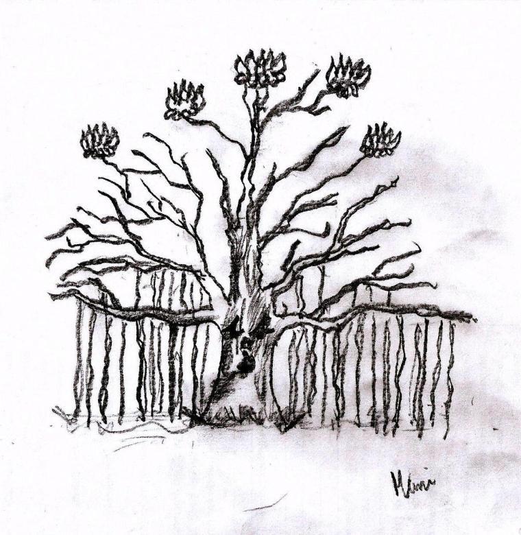 Banyan Lotus Tree