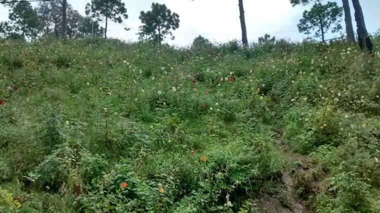 wild-flower-1-e1573037681340.jpg